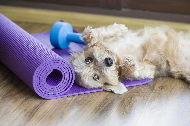 yoga doga